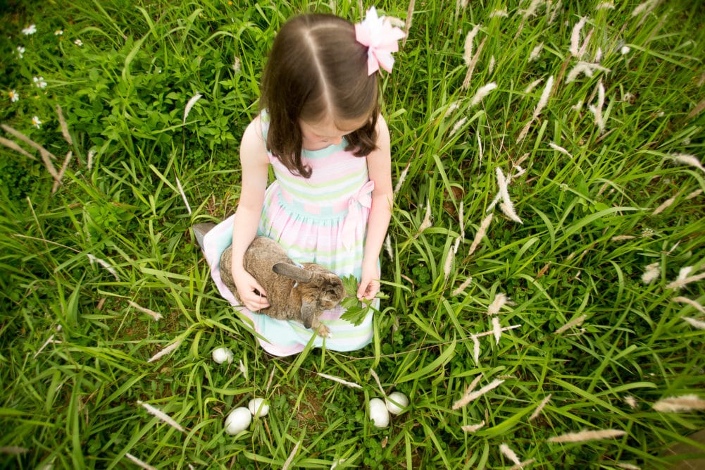Easter mini sessions in a grassy field with a live bunny rabbit by Alison Bell, Photographer